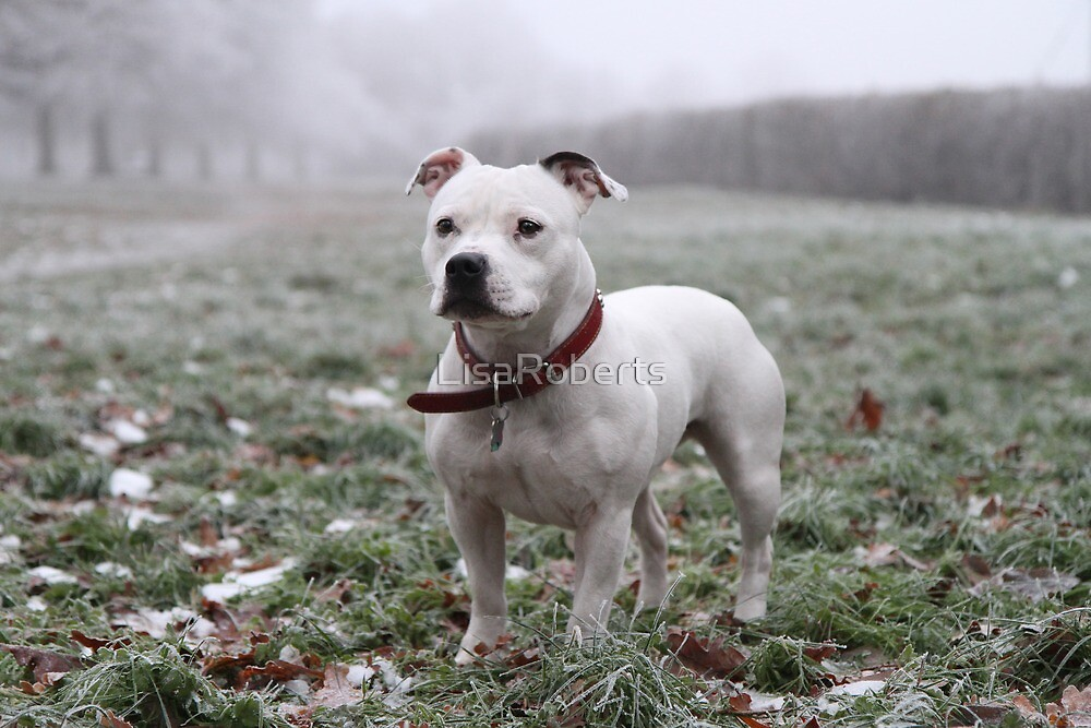 Millie in the Frost by LisaRoberts