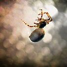 ©NS 3 mm Working In A Spider Life IA by OmarHernandez