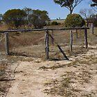 Rabbit proof fence by Rosie Appleton
