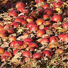 fallen apples by rinajoy