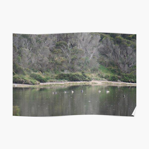 Peaceful nature,American River,Kangaroo Island,S.A. Poster