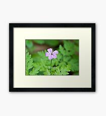 Beautiful Mauve Flower Framed Print