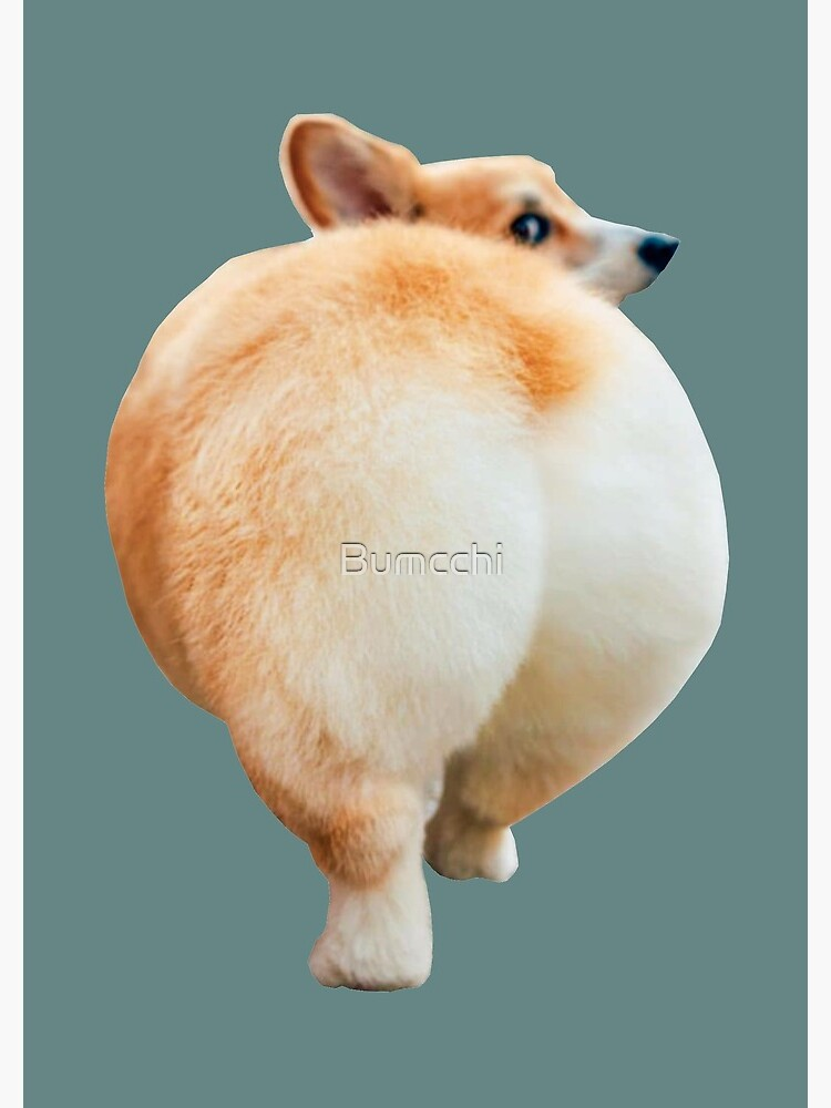 Corgi Butt by Bumcchi