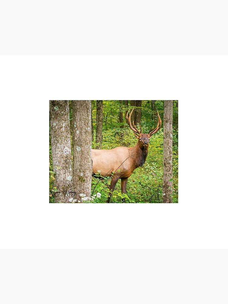 Adult Bull Elk in the Pennsylvania Wilds by mcrvlife