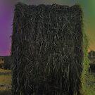 Hay Hay My My by Carolyn Prior