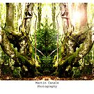 woodland gateways 1 by martincanale