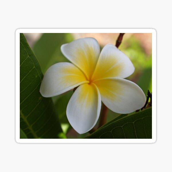 Yellow Frangipani Sticker