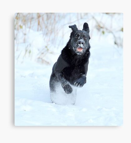 Last year, my xmas present was a black jumper Canvas Print