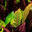 tropical leaf by angelo marasco
