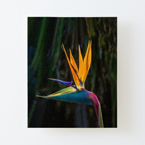 Bird of Paradise Flower (digital painting) Canvas Mounted Print