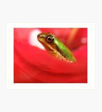 Tiny froglet Art Print
