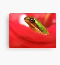 Tiny froglet Canvas Print