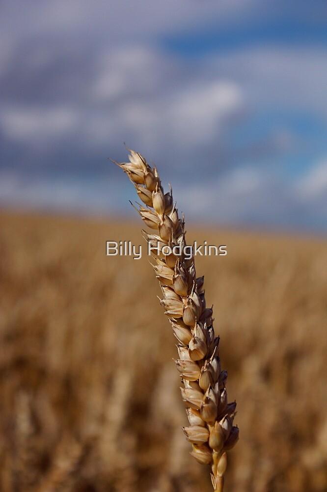 Ear Of Wheat by Billy Hodgkins