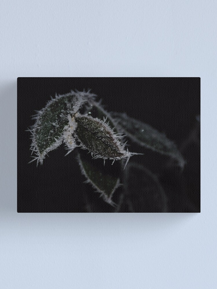 Alternate view of Frozen Leaves Canvas Print