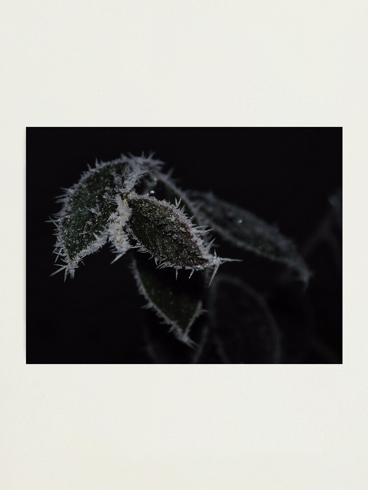 Alternate view of Frozen Leaves Photographic Print
