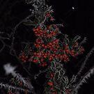 Frozen Berries by Paul  Eden
