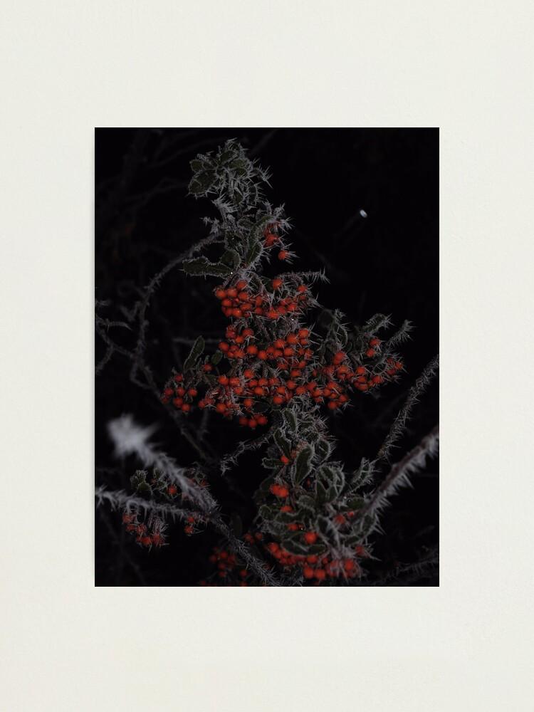 Alternate view of Frozen Berries Photographic Print