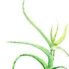 Aquarell Aloe Vera Abbildung von blursbyai
