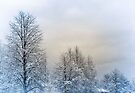 Winter Trees by Elaine Manley
