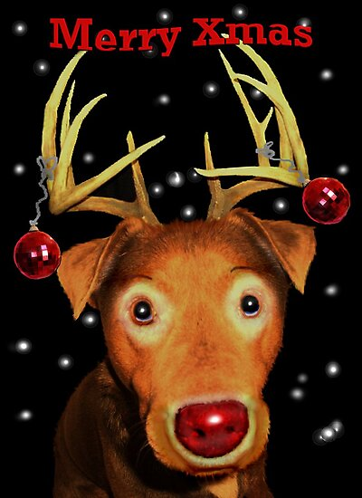 Gromit The Red Nose ReinDog by Tricia Winwood