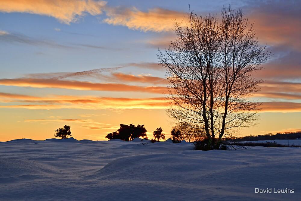 The Setting Sun - Waldridge Fell Country Park. UK by David Lewins