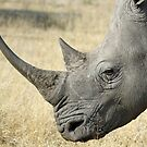 White rhino up close by jozi1