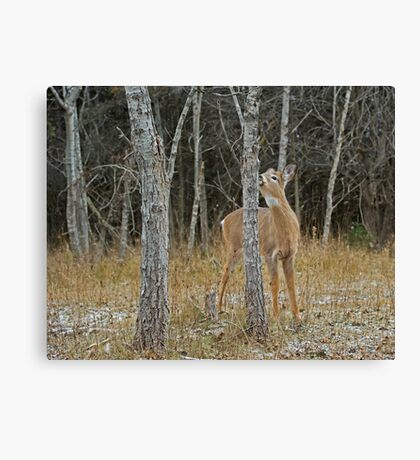 The Kissing Tree Canvas Print