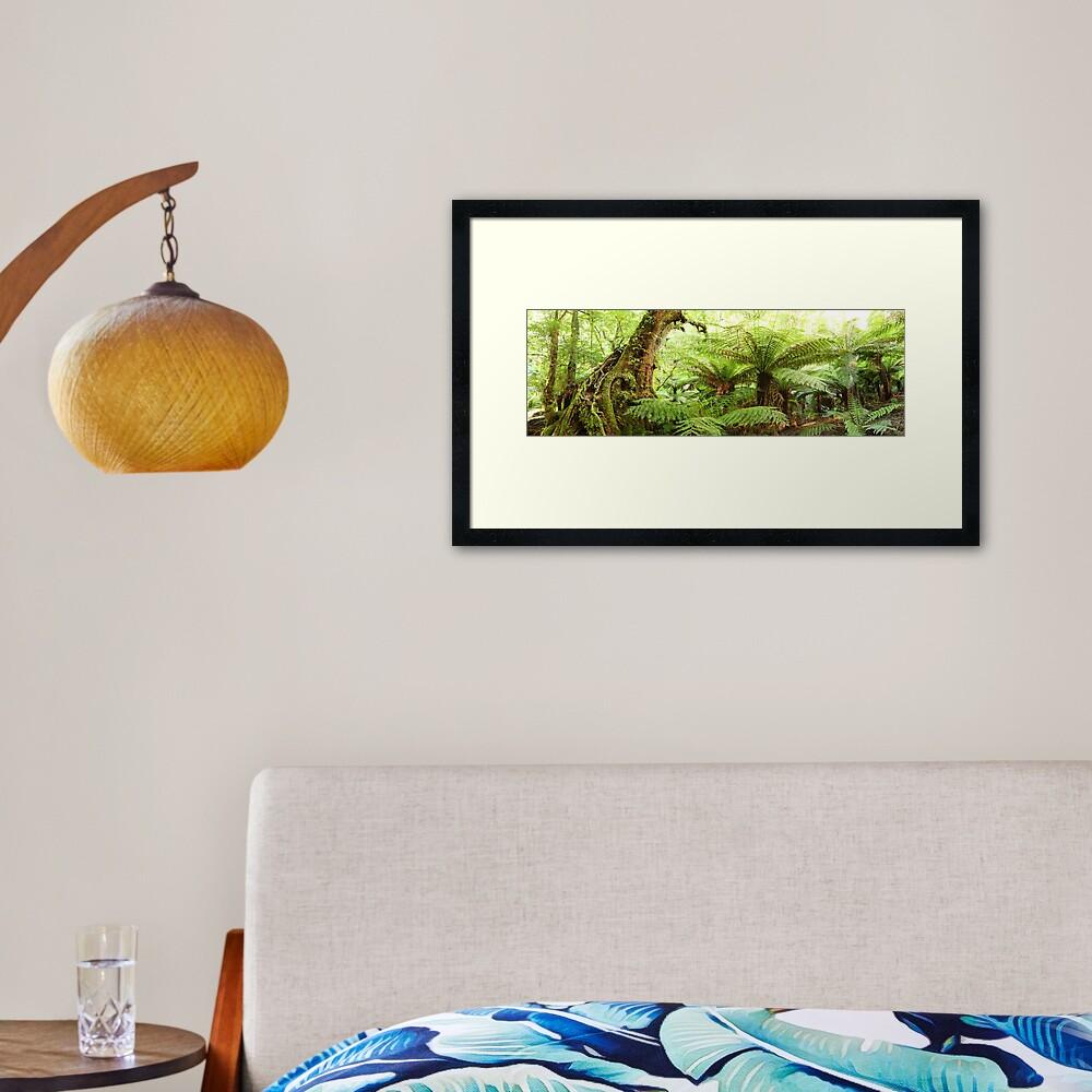 Myrtle Tree, Tarra Bulga National Park, Australia Framed Art Print