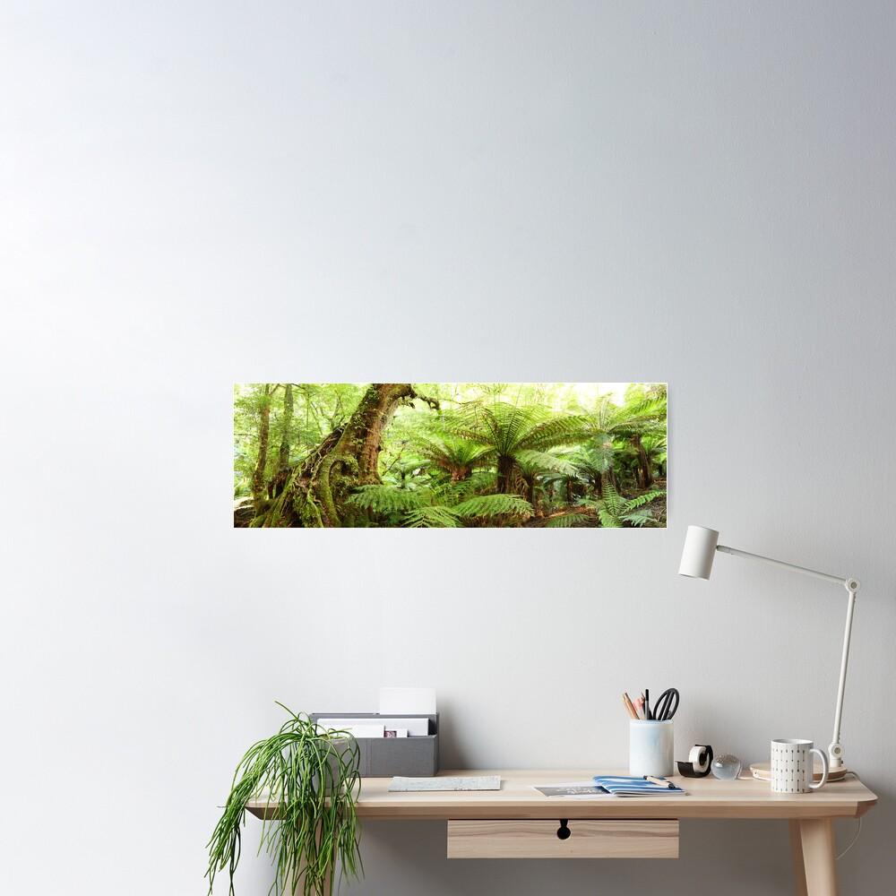 Myrtle Tree, Tarra Bulga National Park, Australia Poster