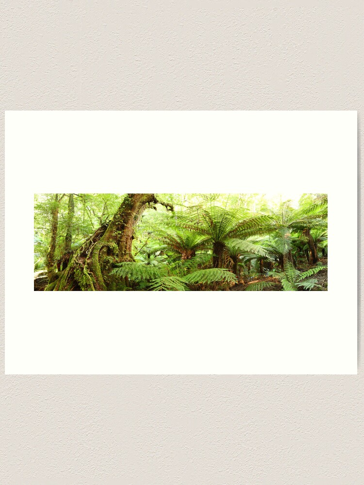 Alternate view of Myrtle Tree, Tarra Bulga National Park, Australia Art Print
