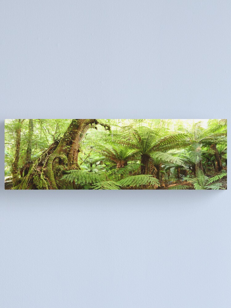 Alternate view of Myrtle Tree, Tarra Bulga National Park, Australia Canvas Print