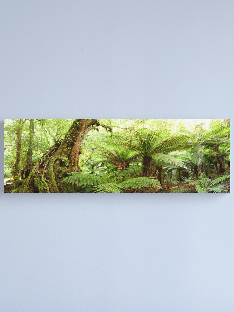 Alternate view of Myrtle Tree, Tarra Bulga National Park, Australia Canvas Print