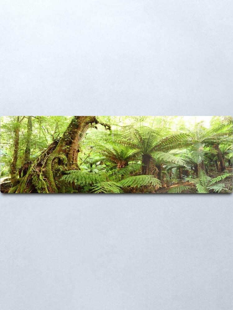 Alternate view of Myrtle Tree, Tarra Bulga National Park, Australia Metal Print
