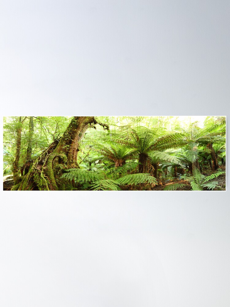 Alternate view of Myrtle Tree, Tarra Bulga National Park, Australia Poster