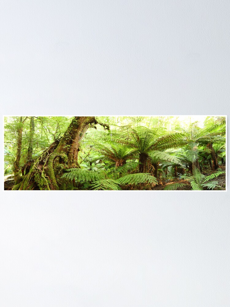 Alternate view of Myrtle Tree, Tarra Bulga National Park, Australia Poster