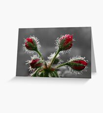 CHRISTMAS IN MAY Greeting Card