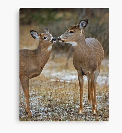 Hey, I know you ! Canvas Print
