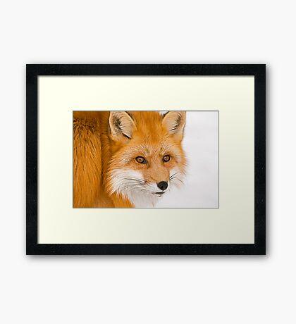 Foxey Framed Print
