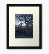 Winter Sun Through the Trees, Gaston South Carolina Framed Print