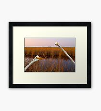 """Birds Eye View"" - great egrets sneak into the picture Framed Print"