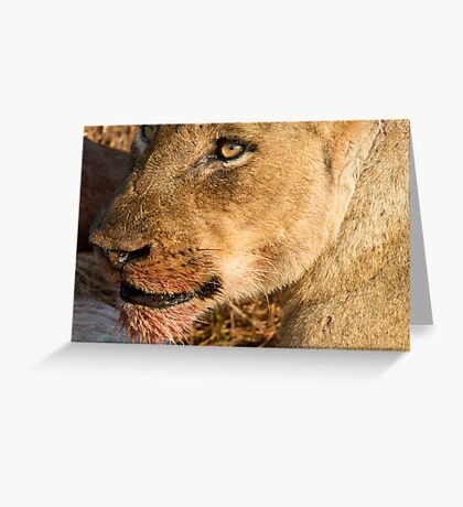 Sparta Lioness Relaxing After Meal Greeting Card