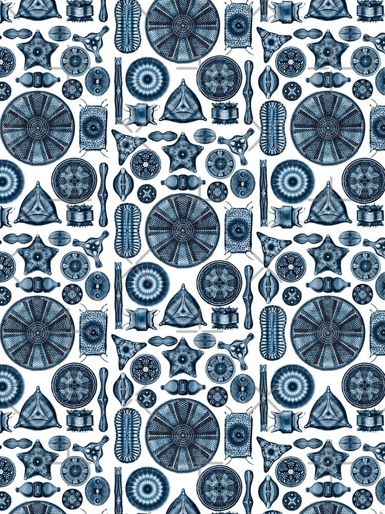 Ernst Haeckel Diatoms Navy Blue by aimeewilson