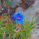 Blue Gentian - closeup by Malinee Ganahl