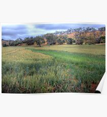 The Grain Of Life - Mine Road, Kanmantoo, The Adelaide Hills Poster