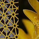 Yellow 2 by Catherine Davis