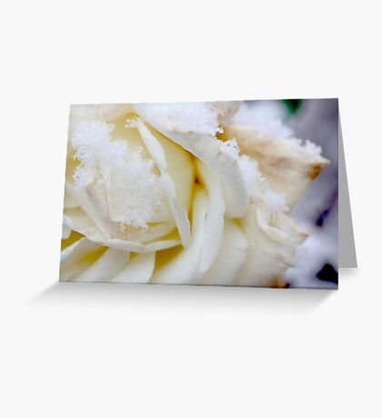 white winter Greeting Card