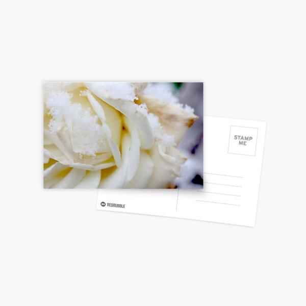 white winter Postcard