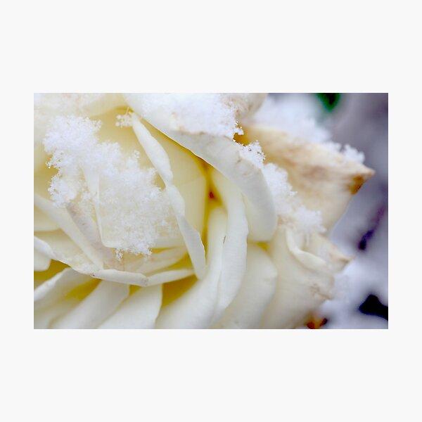 white winter Photographic Print