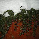 Ivy Snow by weirdartist