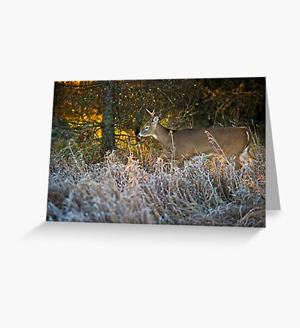 Early morning buck  Greeting Card